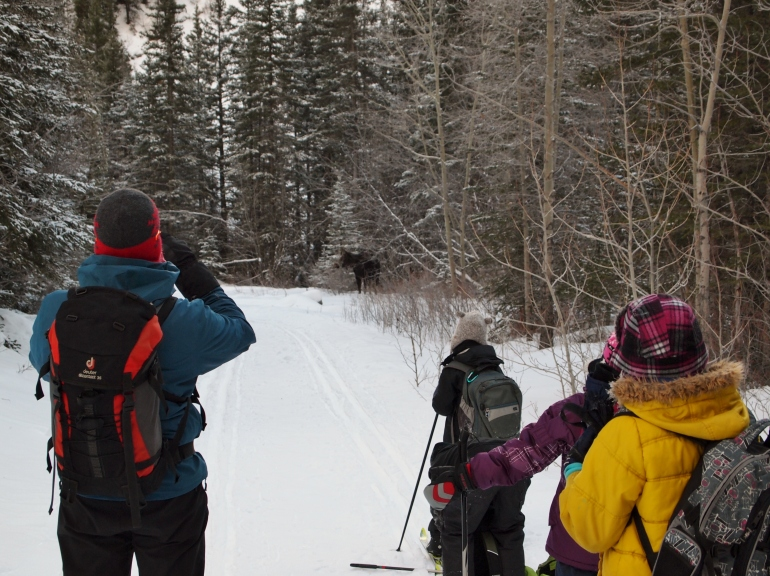 We waited for at least 5 minutes while a pair of juvenile moose just hung out on the cross-country ski trail