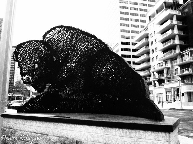 Bison sculpture by Joe Fafard, placed outside the Shaw building in downtown Calgary