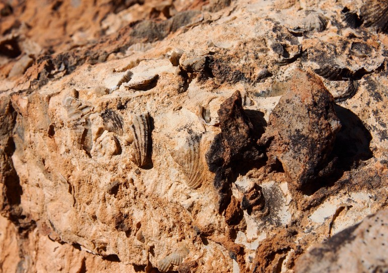 Fossils along the trail