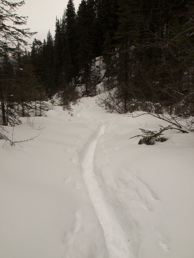 Narrow path in the snow