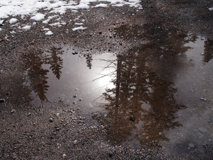 Reflection in puddle