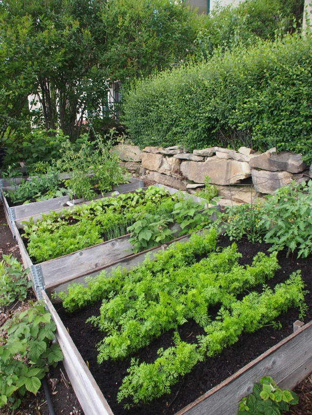 Our 2012 backyard garden, mid-July