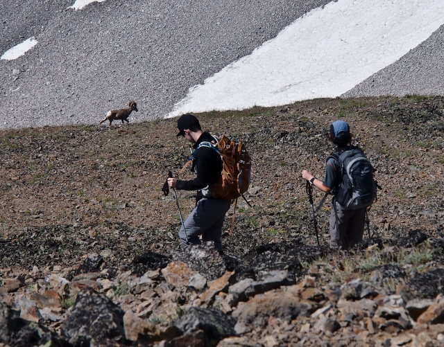 GeoKids descend towards Rocky Mountain Bighorn Sheep