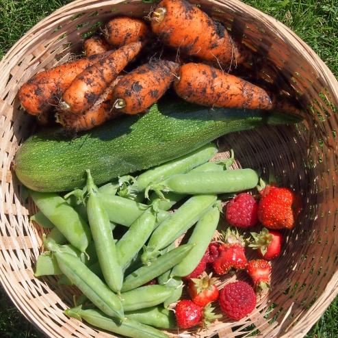 We enjoyed fresh produce from our garden for a couple of months this year, including a good variety of fresh vegetables and some very tasty berries.