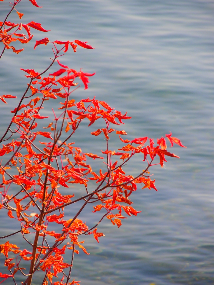 Red leaves at Glenmore Reservoir