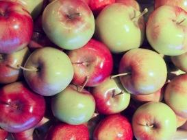 2012 apple harvest