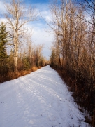 Main path in the Weaselhead
