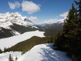 Viewpoint above Peyto Lake, looking northwest along the Mistaya Valley