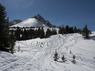 Braided trails instead of a definite trail to Bow Summit Lookout