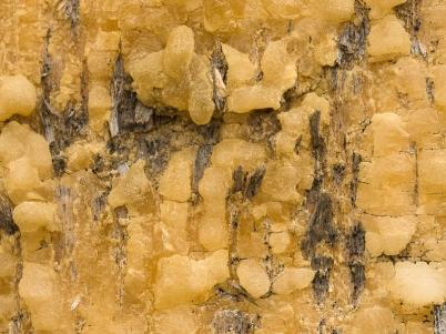 Dried Tears of a Tree