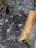 Pond life along the shoreline