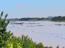 Debris (mostly fallen trees) in the north end of Glenmore Reservoir