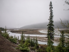 Beauty Creek, along the Icefields Parkway