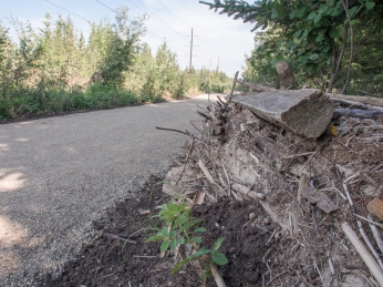Flood debris along the already-repaired pathway in Griffith Woods