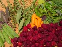Mid-August morning harvest