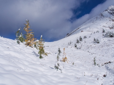 We reached the front rim of Ptarmigan Cirque around 10 a.m. and saw that the larch trees wore shrouds of snow. Fortunately for us, as the morning wore on, the trees dropped their snow loads and we saw a little more colour.