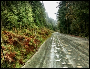The long and winding hard-packed gravel road to Bamfield