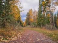 Leaves along trail