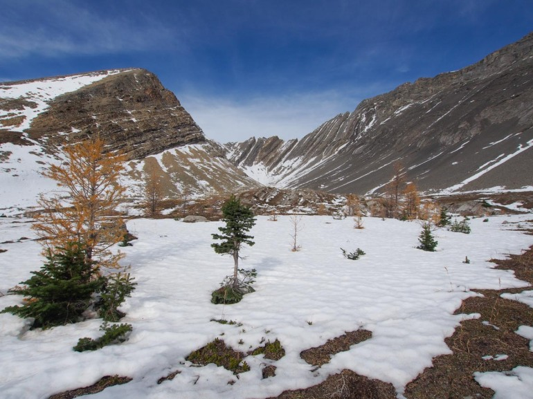 This smaller cirque backs up against Ptarmigan Cirque. There are still a few needles on the larch trees and you can see that the snow is fairly thin on the ground.