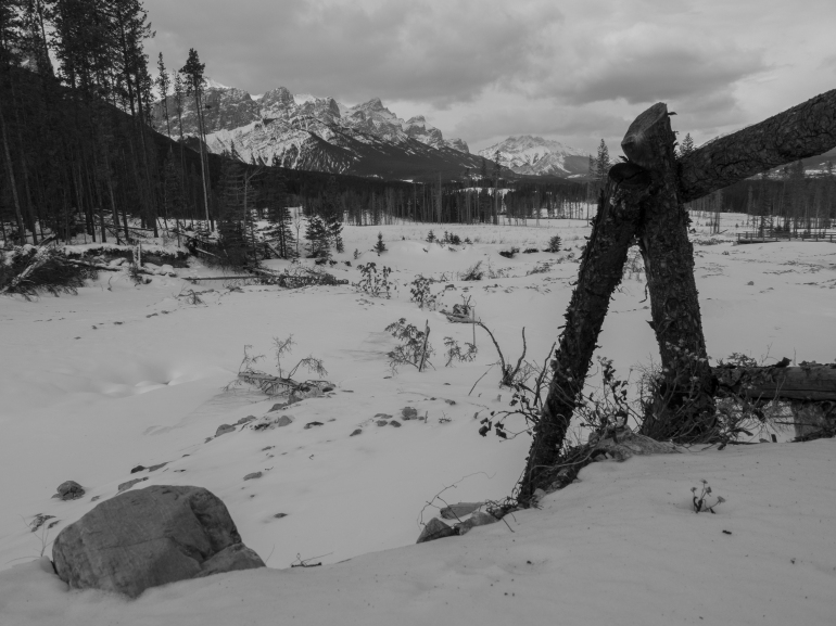 Mount Rundle viewed from the east bank of the flood-ravaged Three Sisters Creek. The fence line marks the boundary of the Bow Valley Wildland Provincial Park.