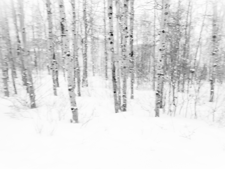 There's a little patch of urban forest between the nearest LRT station and home in Calgary. A point and shoot camera isn't the best option for making ICM photographs, but it was all I had with me at the time.