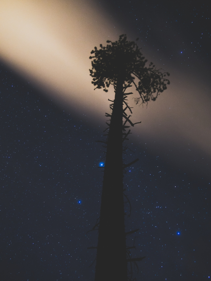 spruce-at-night
