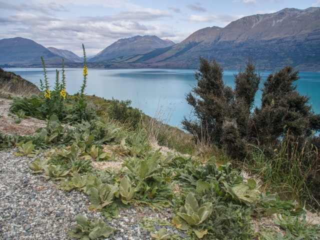 There are several paved pull-outs along the highway where tourists can safely stop to photograph Lake Wakatipu.