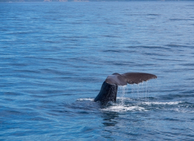 And C also photographed a Wperm Whale's tail.