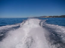Kaikoura-Whale-Watch