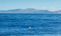 Kaikoura-Whale-Watch