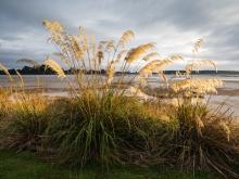 Nelson-NZ