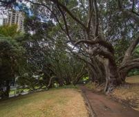 Albert-Park