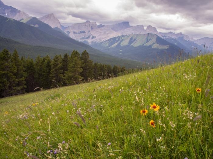 Pigeon Mountain Alberta on Pigeon Mountain