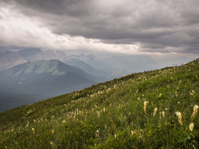 Even common vetch looks pretty in this photo from the grassy slopes of Pigeon Mountain looking towards Wind Ridge.