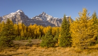 Larch-Valley