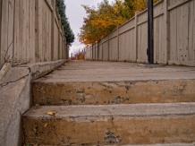 Calgary-fall-colour