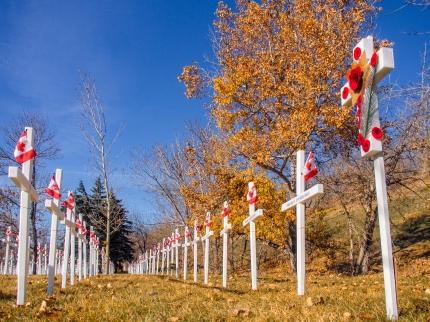 Field-of-Crosses