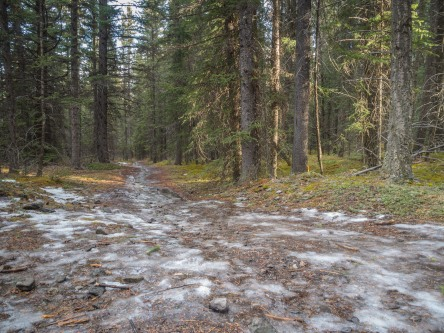 Icy-trail
