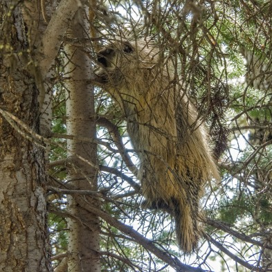 Porcupine-in-Tree