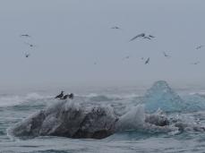 Iceland-Ice-Beach