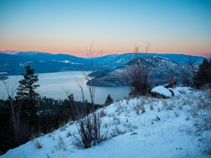 Sparkling-Hill-sunrise