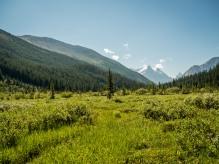 Niles-Creek-Meadow
