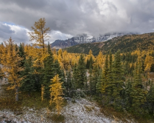 Sunshine-Meadows-Larch