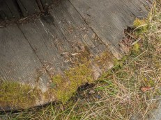moss-on-wood