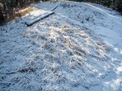 fresh-snow-on-long-grass