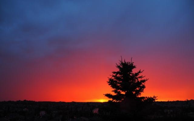sunset-spruce