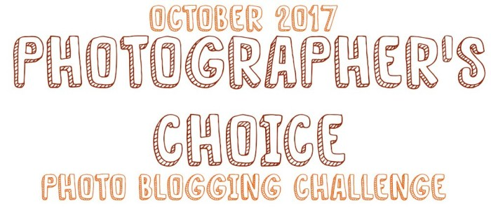 photographers-choice