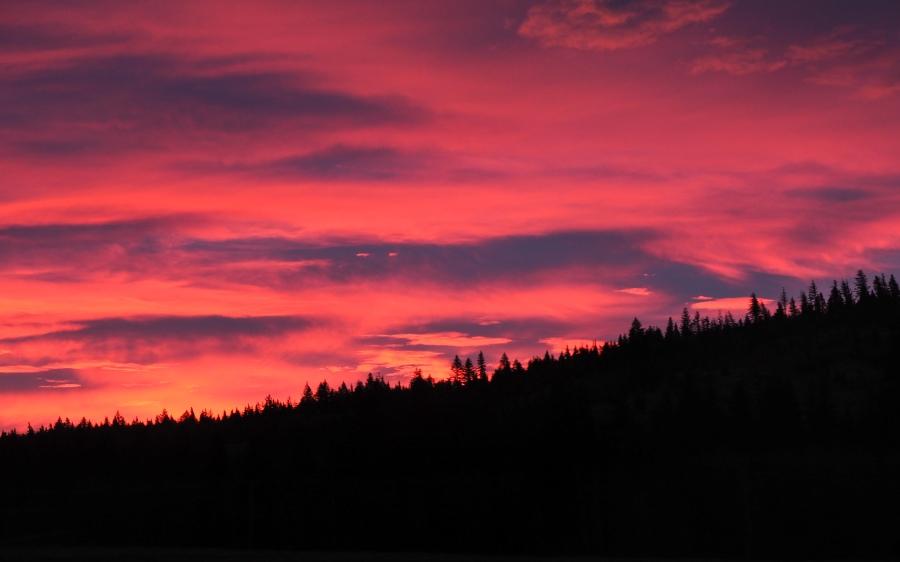 tree-silhouette-sunrise
