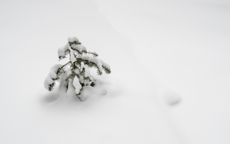 not-quite-buried-in-snow-tree