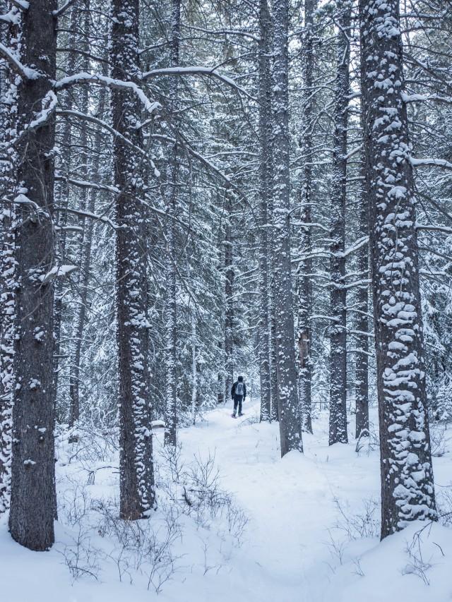 snowshoe-in-woods